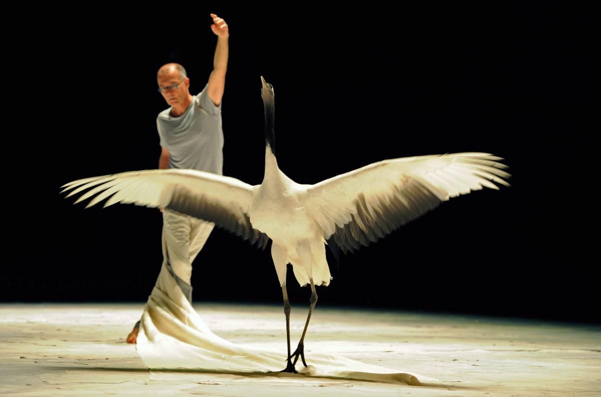 « Light Bird» ©AlainJulien