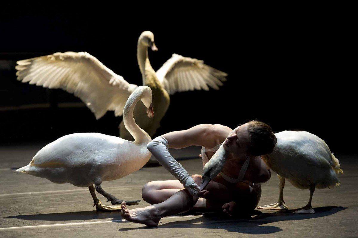 « Swan» ©LaurentPhilippe
