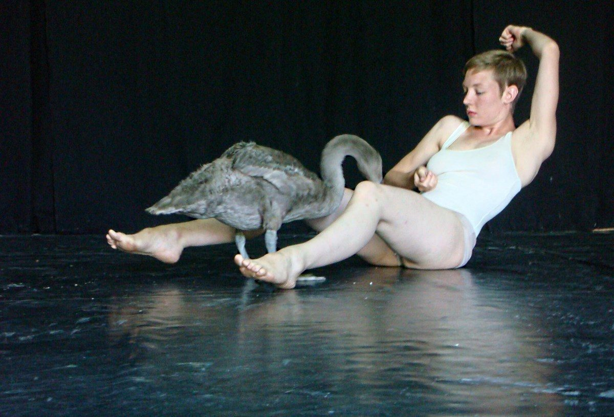 « Swan» ©LucPetton